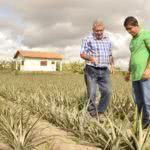 Modelo de contrato de parceria agrícola