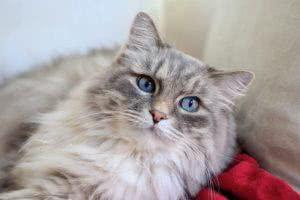 contrato-de-compra-e-venda-de-gato