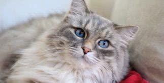Contrato de compra e venda de gato