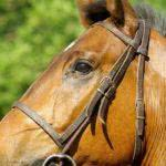 Recibo de compra e venda de cavalo com reserva de domínio