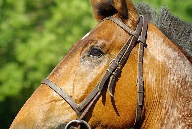 recibo-de-compra-e-venda-de-cavalo-com-reserva-de-dominio